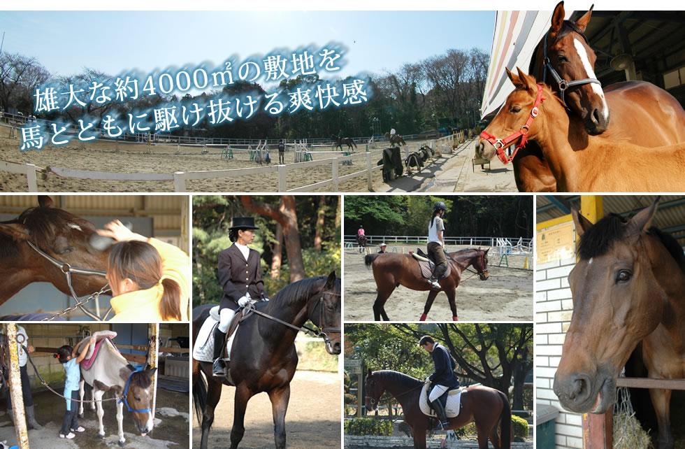 雄大な約4000㎡の敷地を馬とともに駆け抜ける爽快感